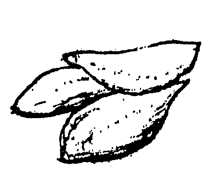 koppa-1
